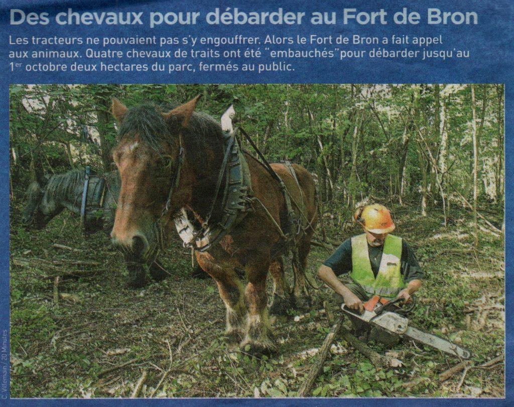 Débardage des bois du Fort de Bron